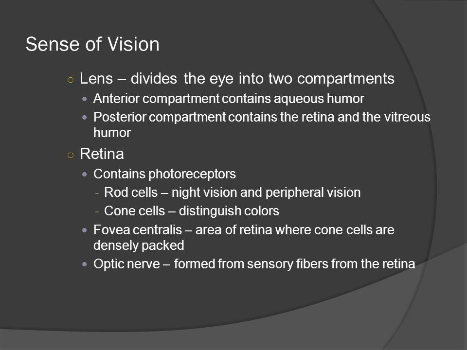 Sense of Vision Lens – divides the eye into two compartments Retina