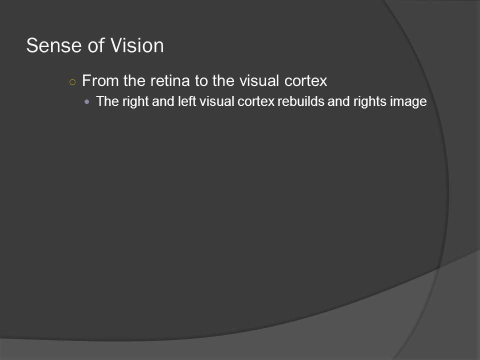 Sense of Vision From the retina to the visual cortex