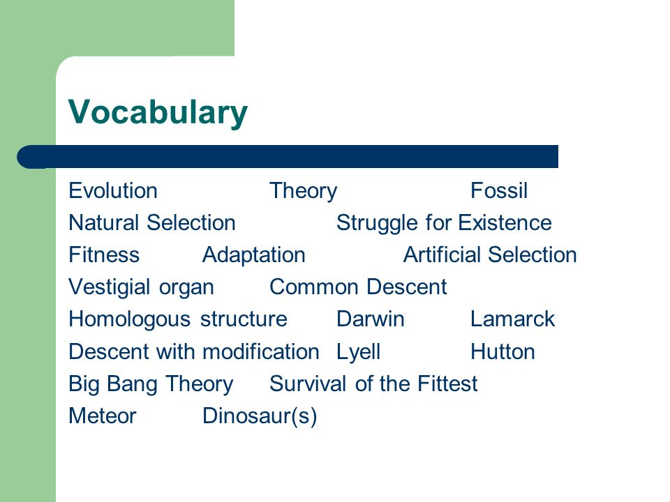 Vocabulary Evolution Theory Fossil