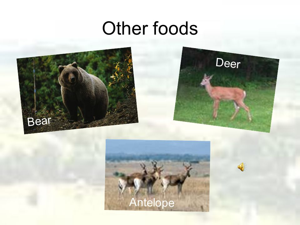 Other foods Bear Deer Antelope