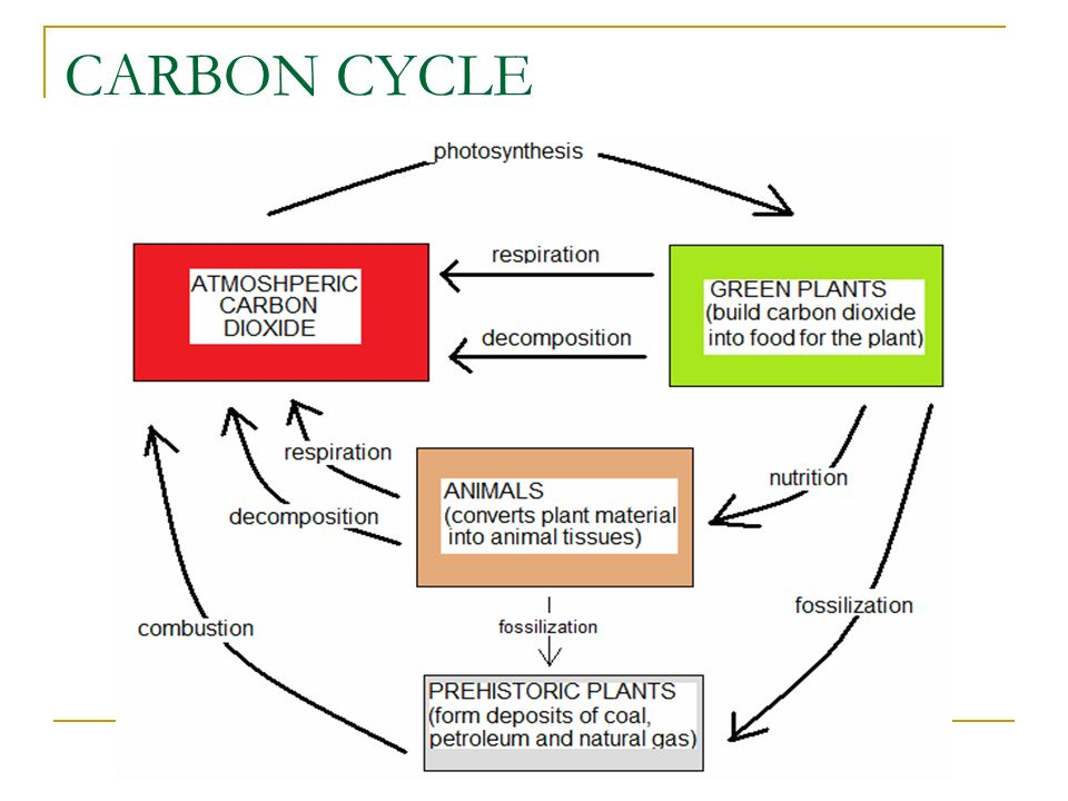 Cycling of nutrients in the ecosystem ppt video online download 24 carbon cycle ccuart Images