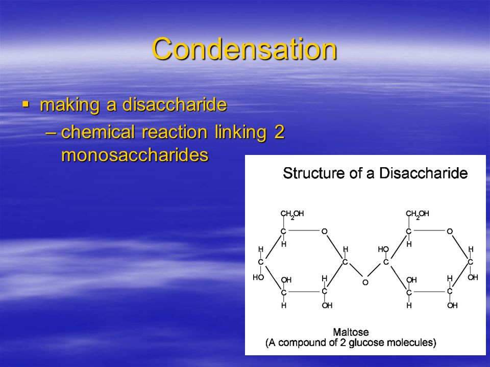 Condensation making a disaccharide