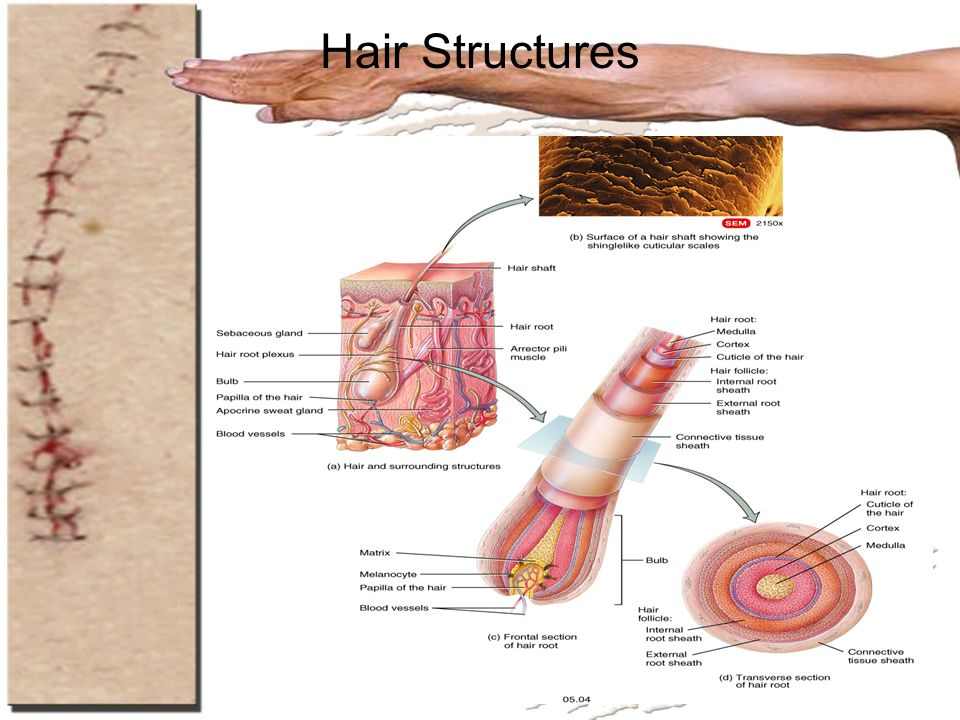 Hair Structures