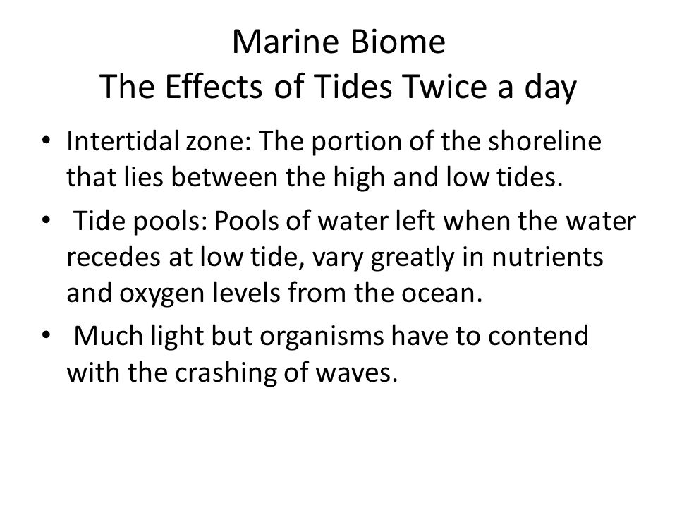 Marine Biome The Effects of Tides Twice a day