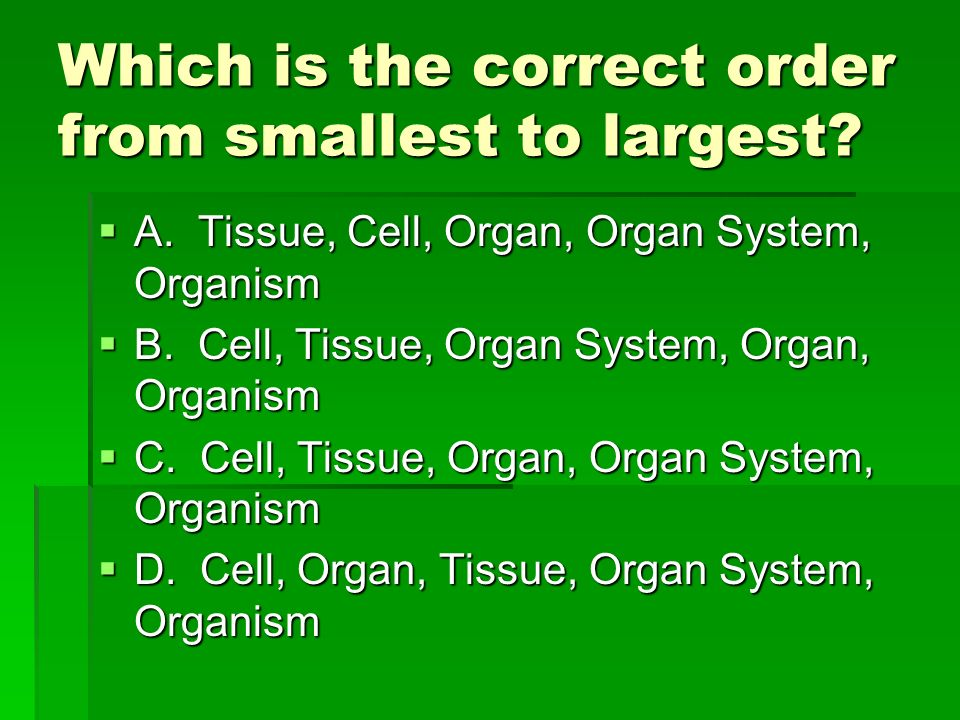 Which is the correct order from smallest to largest