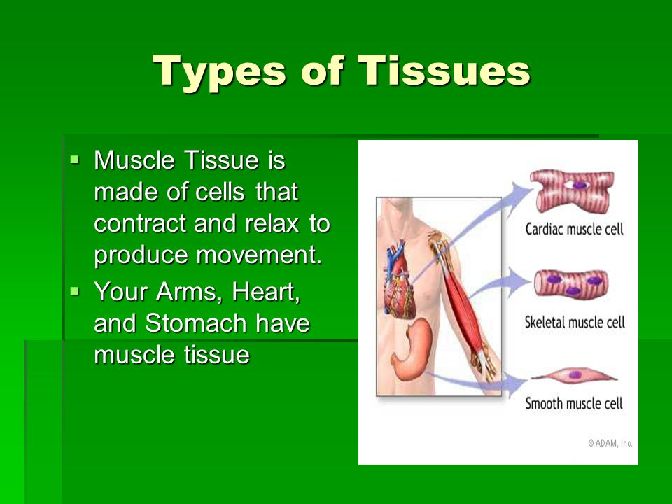 Types of Tissues Muscle Tissue is made of cells that contract and relax to produce movement.