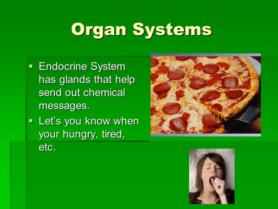 Organ Systems Endocrine System has glands that help send out chemical messages.