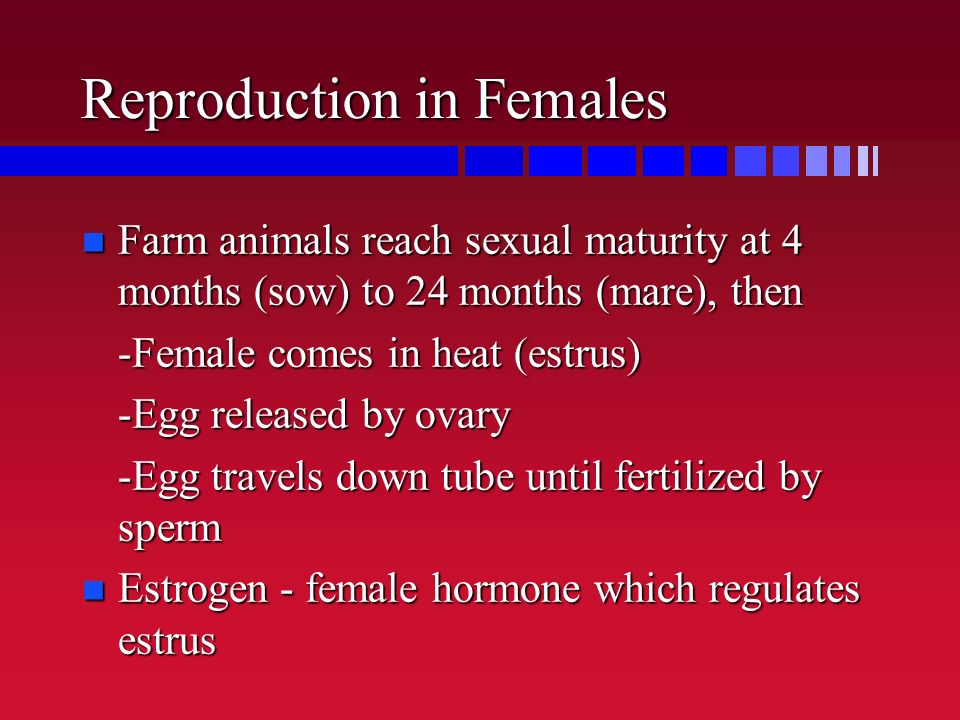 Reproduction in Females