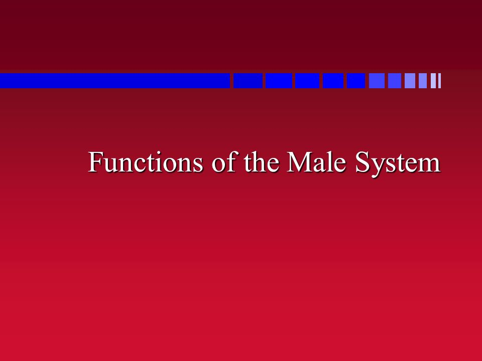 Functions of the Male System