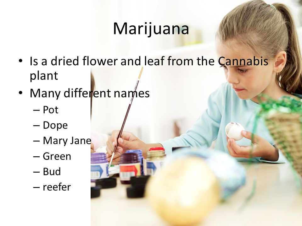 Marijuana Is a dried flower and leaf from the Cannabis plant