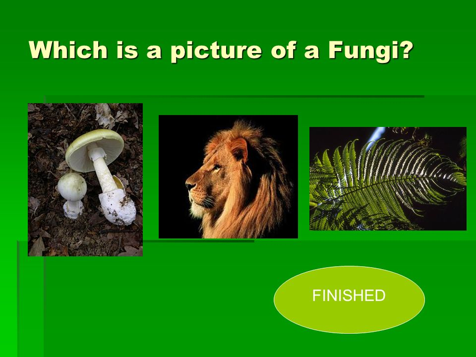 Which is a picture of a Fungi