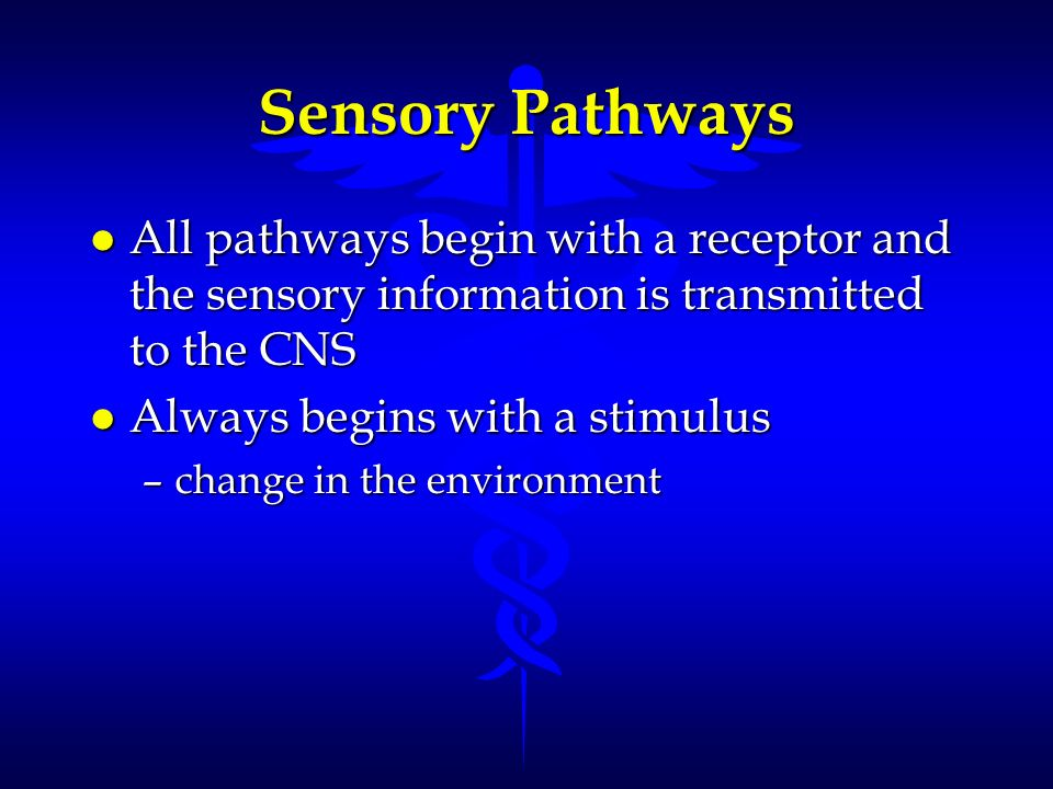 Sensory Pathways All pathways begin with a receptor and the sensory information is transmitted to the CNS.