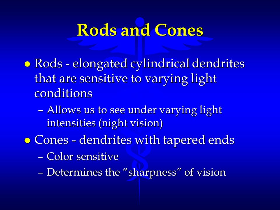 Rods and Cones Rods - elongated cylindrical dendrites that are sensitive to varying light conditions.