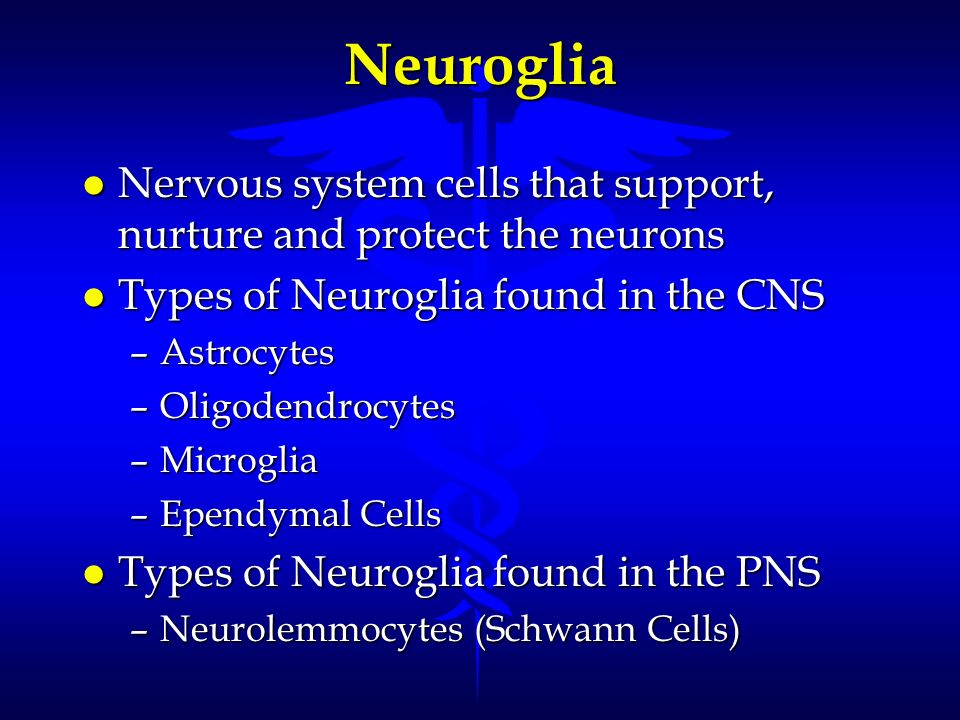 Neuroglia Nervous system cells that support, nurture and protect the neurons. Types of Neuroglia found in the CNS.