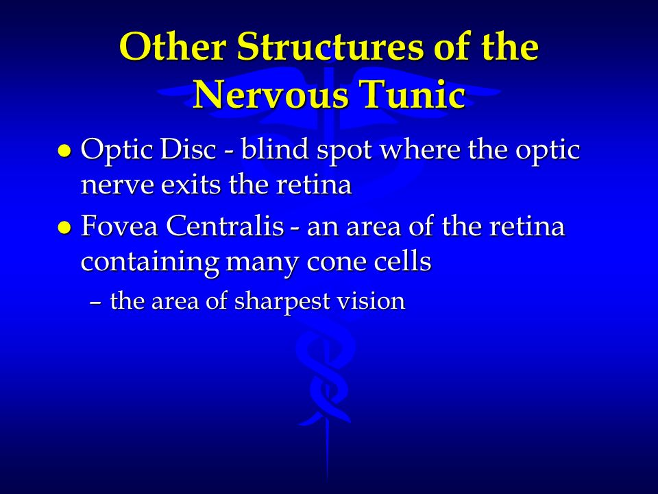 Other Structures of the Nervous Tunic