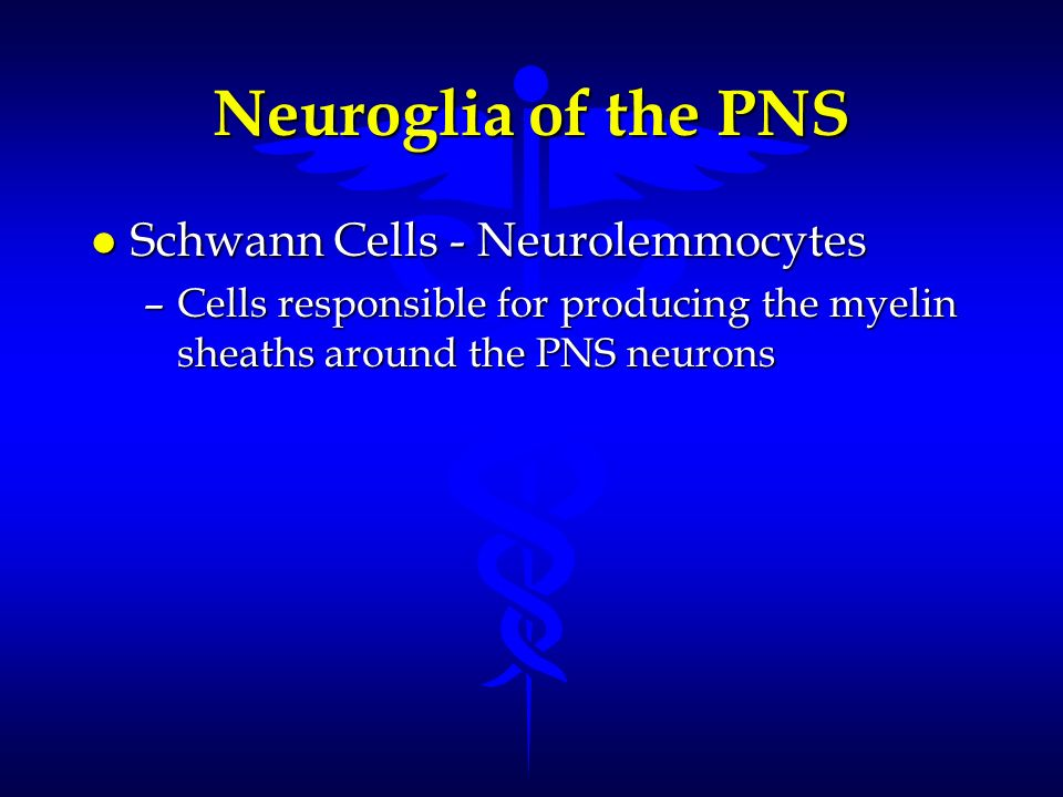 Neuroglia of the PNS Schwann Cells - Neurolemmocytes