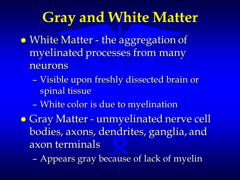 Gray and White Matter White Matter - the aggregation of myelinated processes from many neurons.