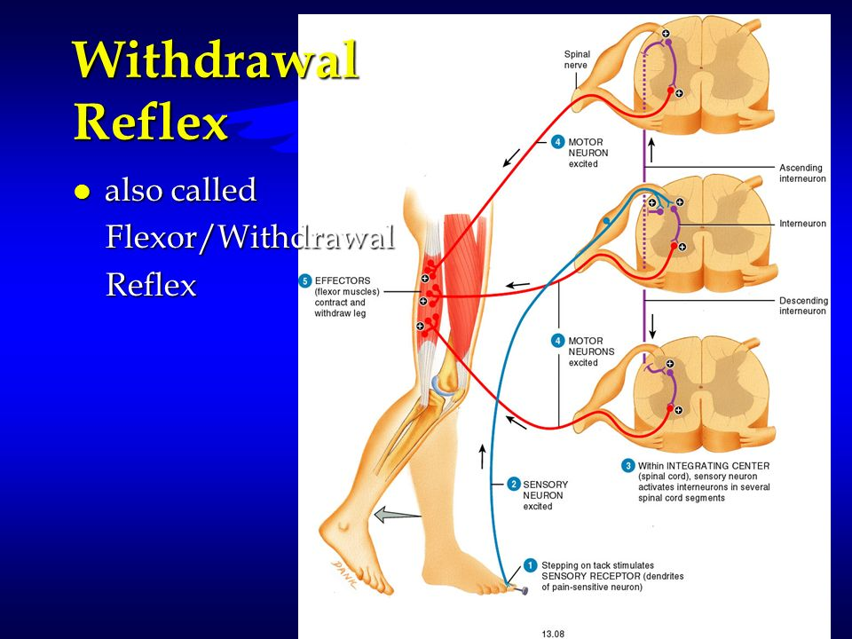Withdrawal Reflex also called Flexor/Withdrawal Reflex
