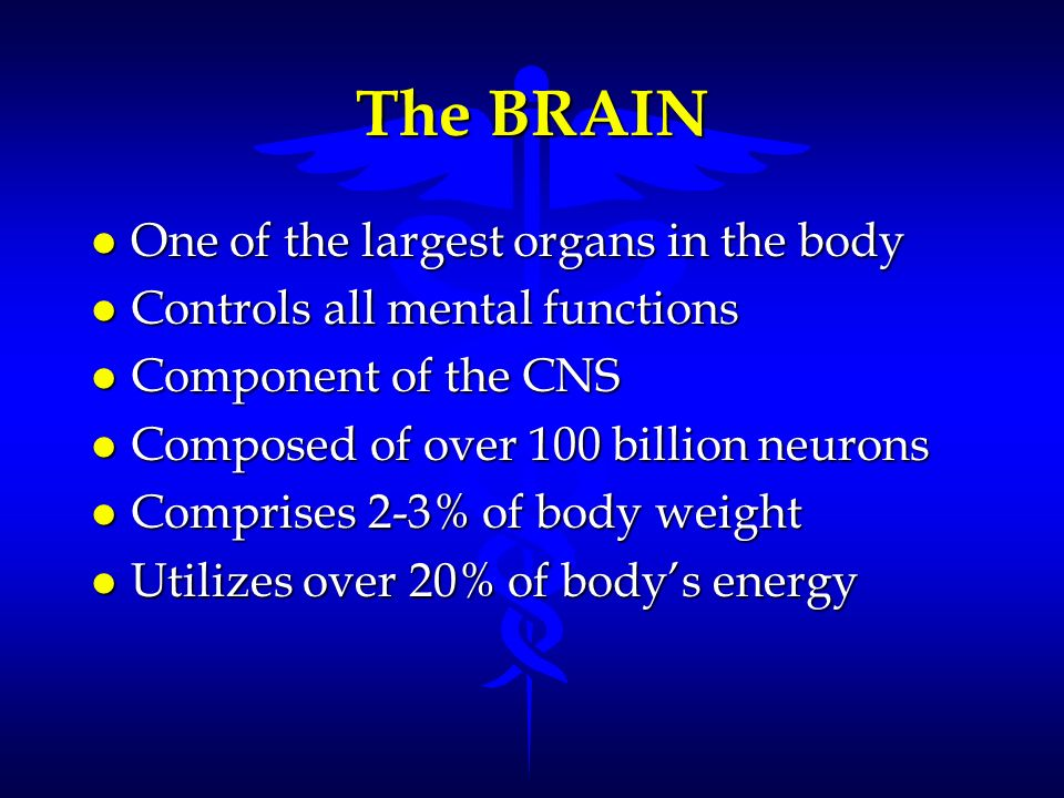 The BRAIN One of the largest organs in the body