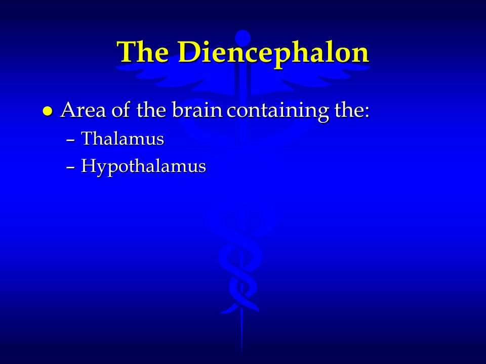 The Diencephalon Area of the brain containing the: Thalamus
