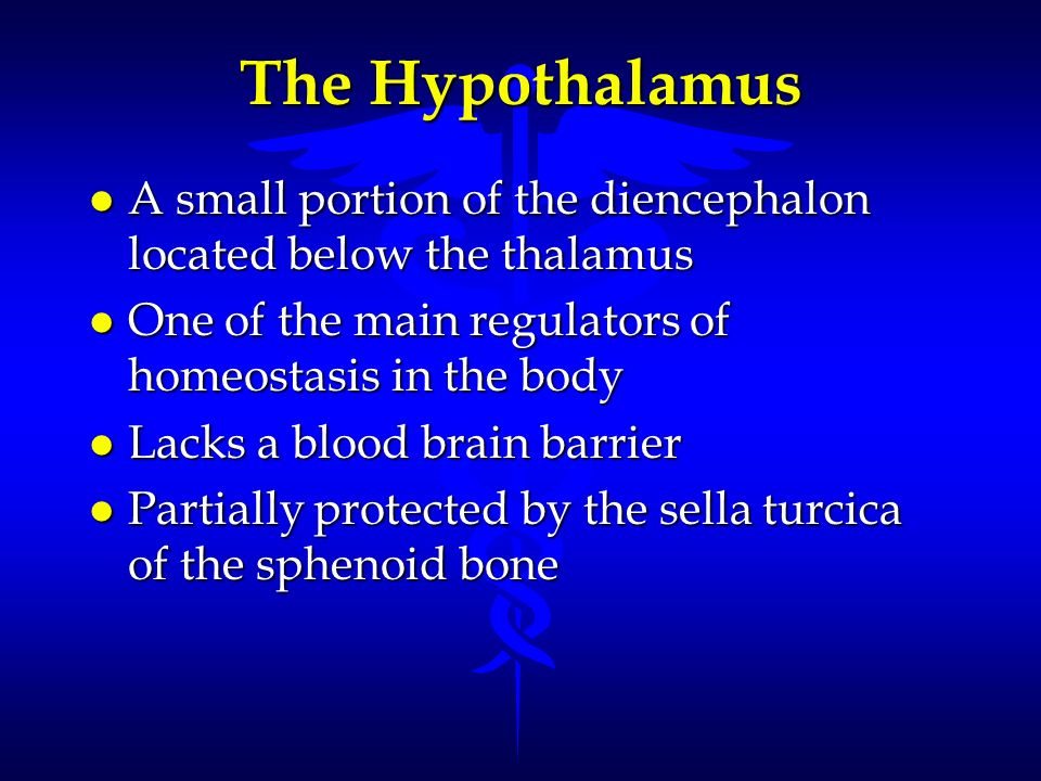 The Hypothalamus A small portion of the diencephalon located below the thalamus. One of the main regulators of homeostasis in the body.