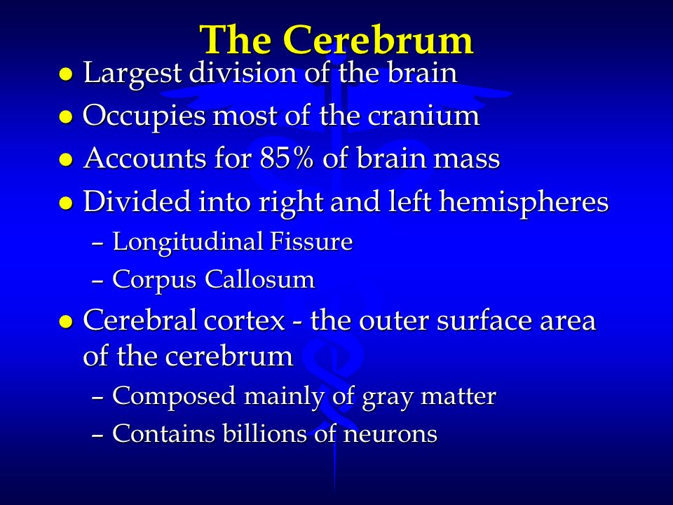 The Cerebrum Largest division of the brain