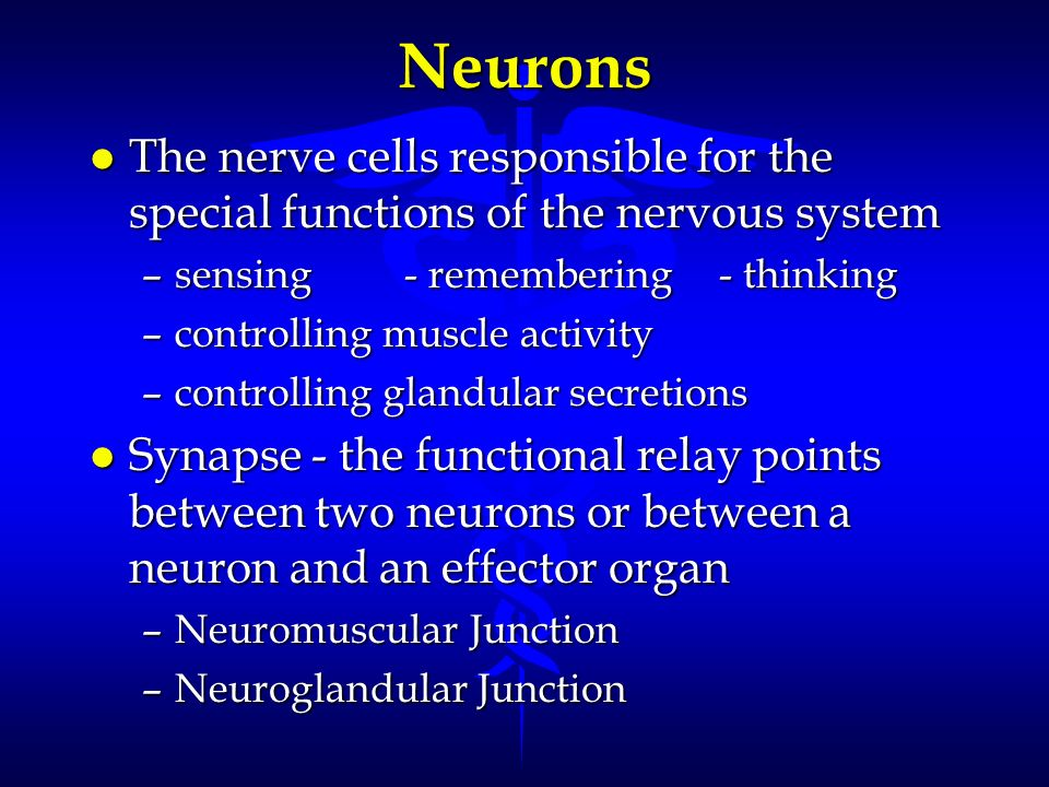 Neurons The nerve cells responsible for the special functions of the nervous system. sensing - remembering - thinking.
