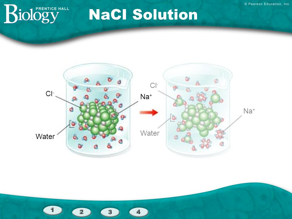 NaCI Solution Cl- Cl- Na+ Na+ Water Water