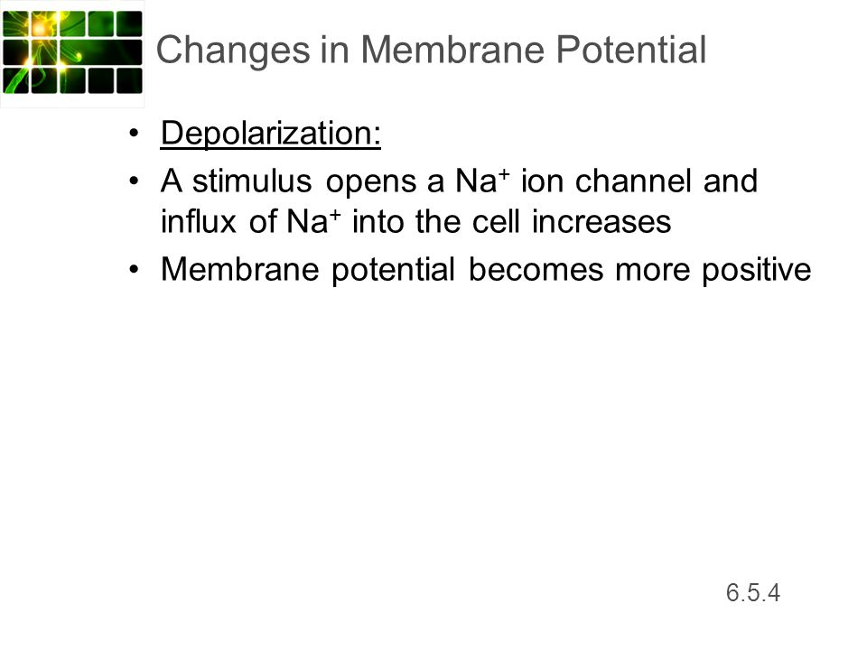 Changes in Membrane Potential