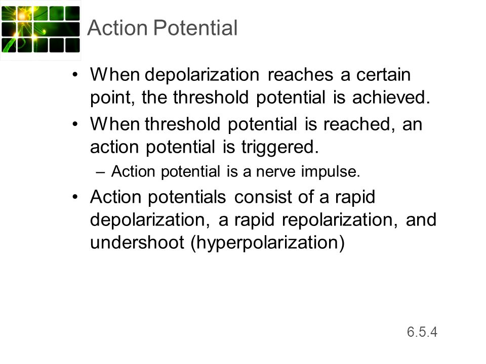 Action Potential When depolarization reaches a certain point, the threshold potential is achieved.