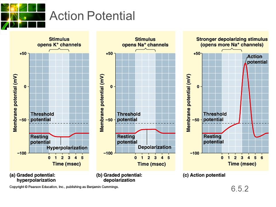 Action Potential 6.5.2