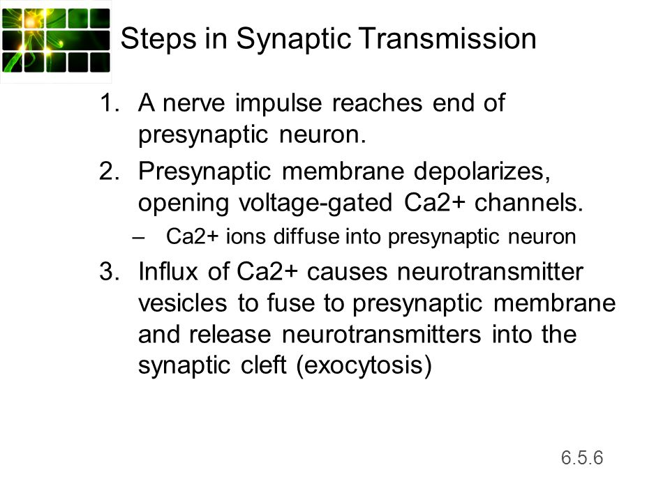 Steps in Synaptic Transmission