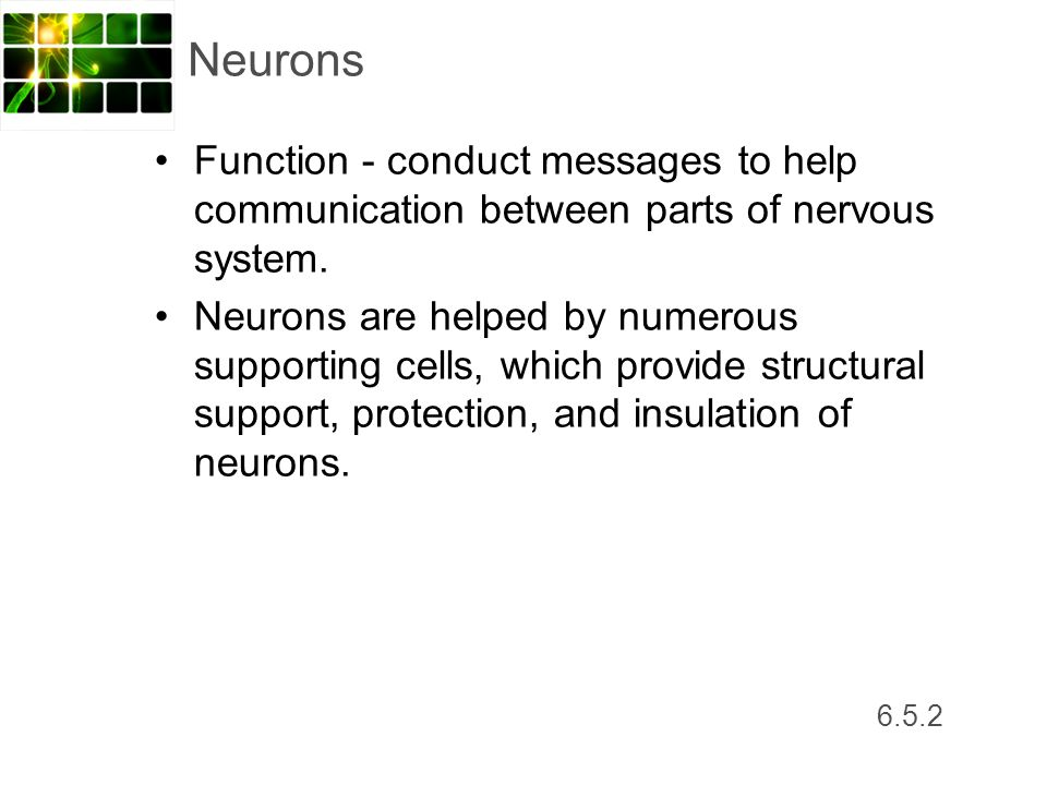 Neurons Function - conduct messages to help communication between parts of nervous system.