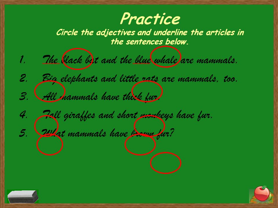 Practice Circle the adjectives and underline the articles in the sentences below.