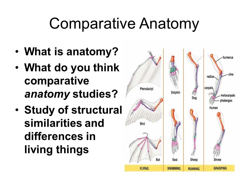 Aim How Do Comparative Studies Help Trace Evolution Ppt Download