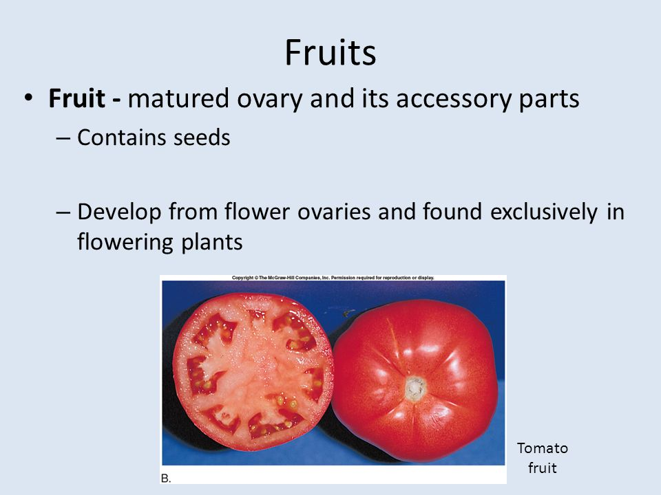 Flowers, Fruits, and Seeds - ppt video online download