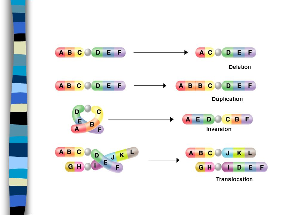 Deletion Duplication Inversion Translocation