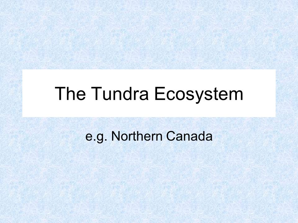 The Tundra Ecosystem e.g. Northern Canada