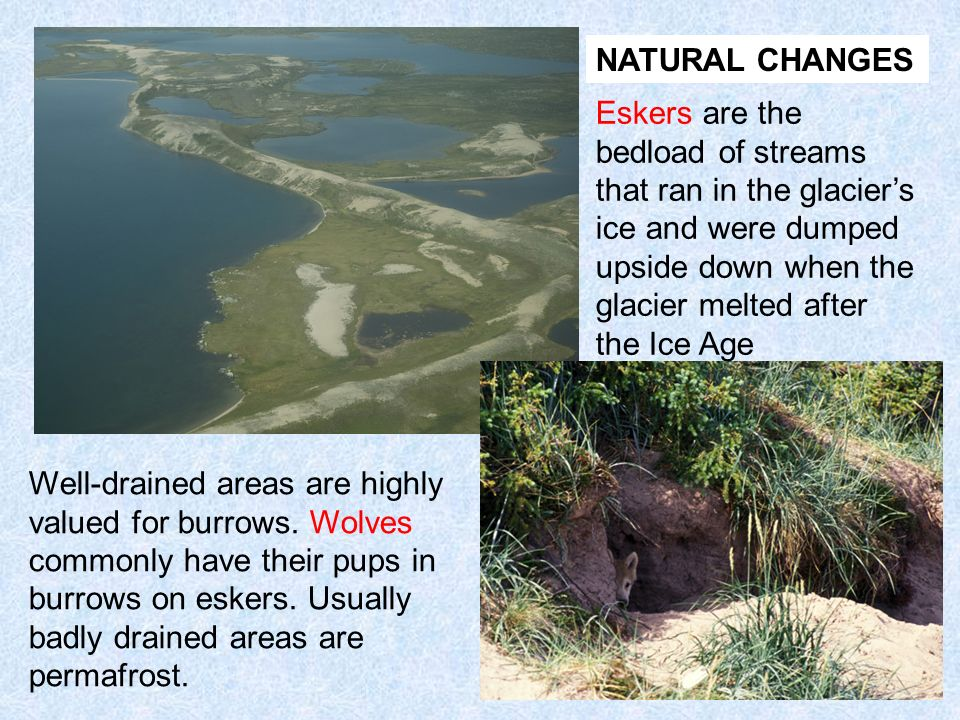 NATURAL CHANGES Eskers are the bedload of streams that ran in the glacier's ice and were dumped upside down when the glacier melted after the Ice Age.