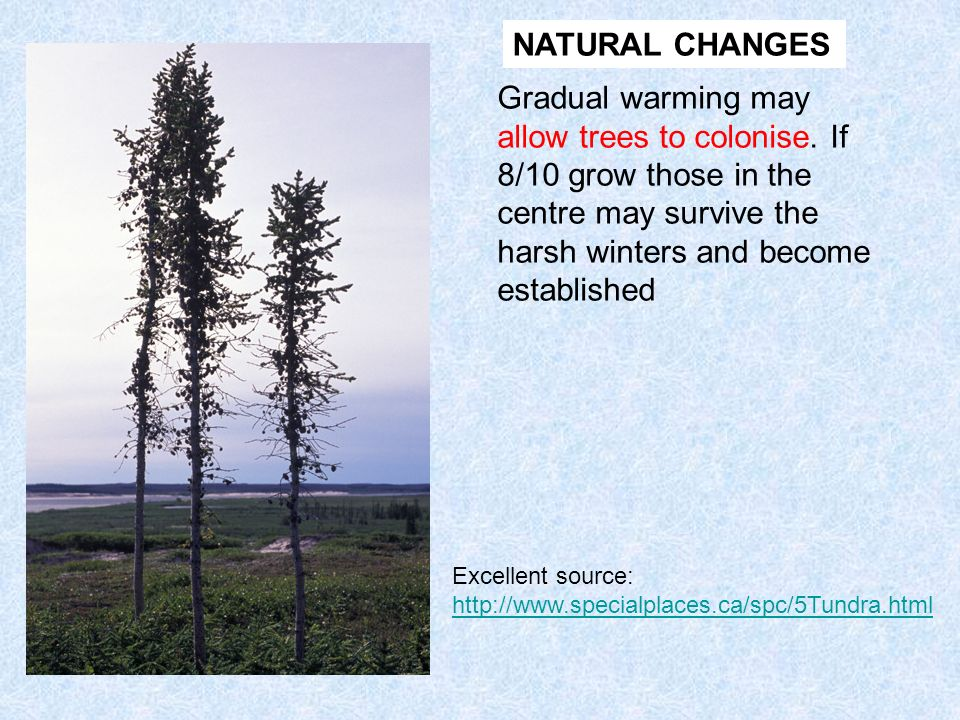 NATURAL CHANGES Gradual warming may allow trees to colonise. If 8/10 grow those in the centre may survive the harsh winters and become established.
