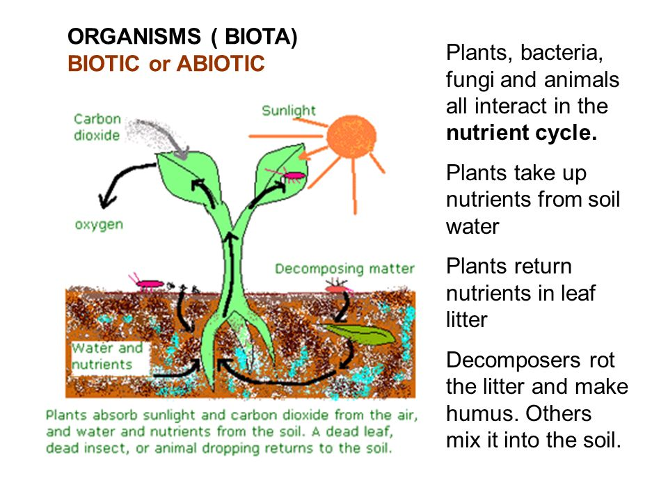 ORGANISMS ( BIOTA) BIOTIC or ABIOTIC