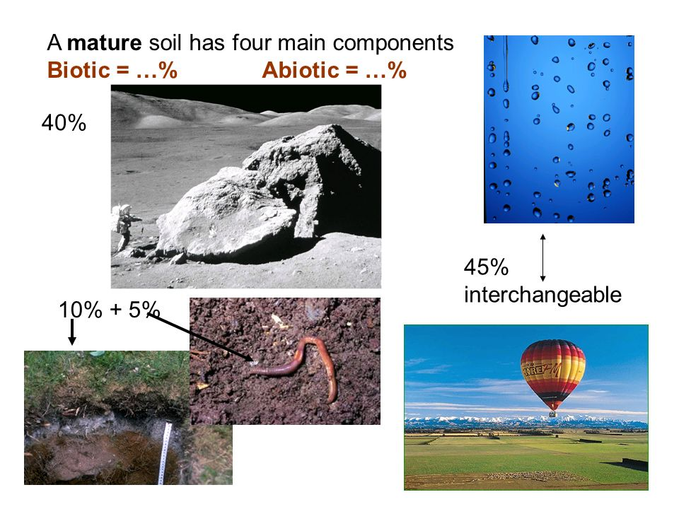 A mature soil has four main components Biotic = …% Abiotic = …%