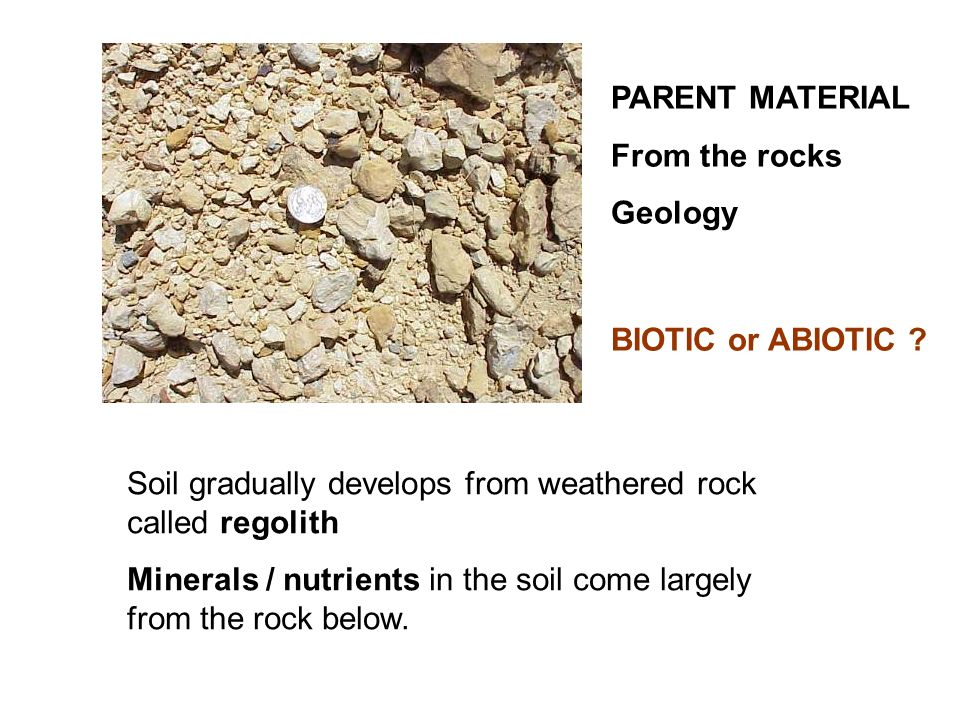 PARENT MATERIAL From the rocks. Geology. BIOTIC or ABIOTIC Soil gradually develops from weathered rock called regolith.
