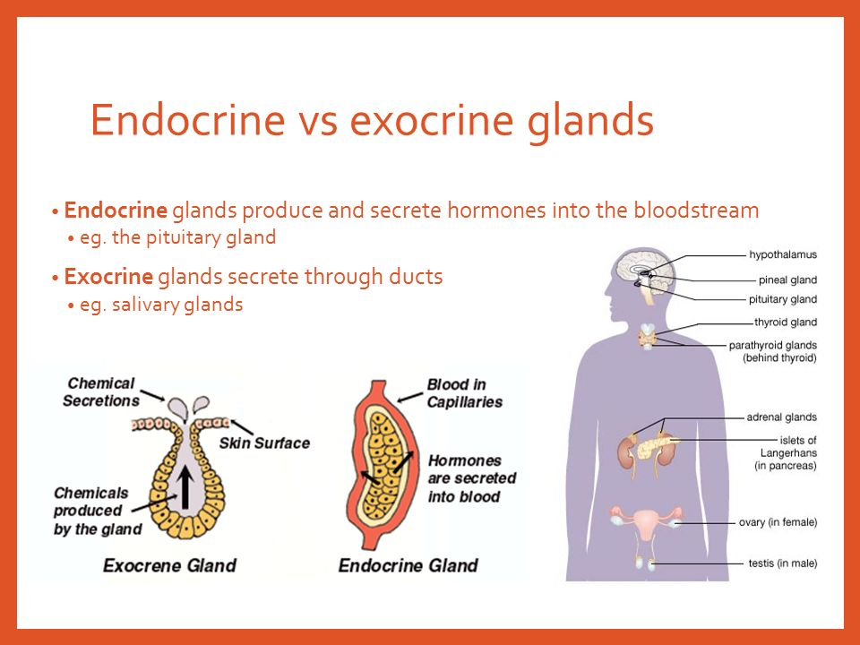 The Endocrine System Ppt Video Online Download