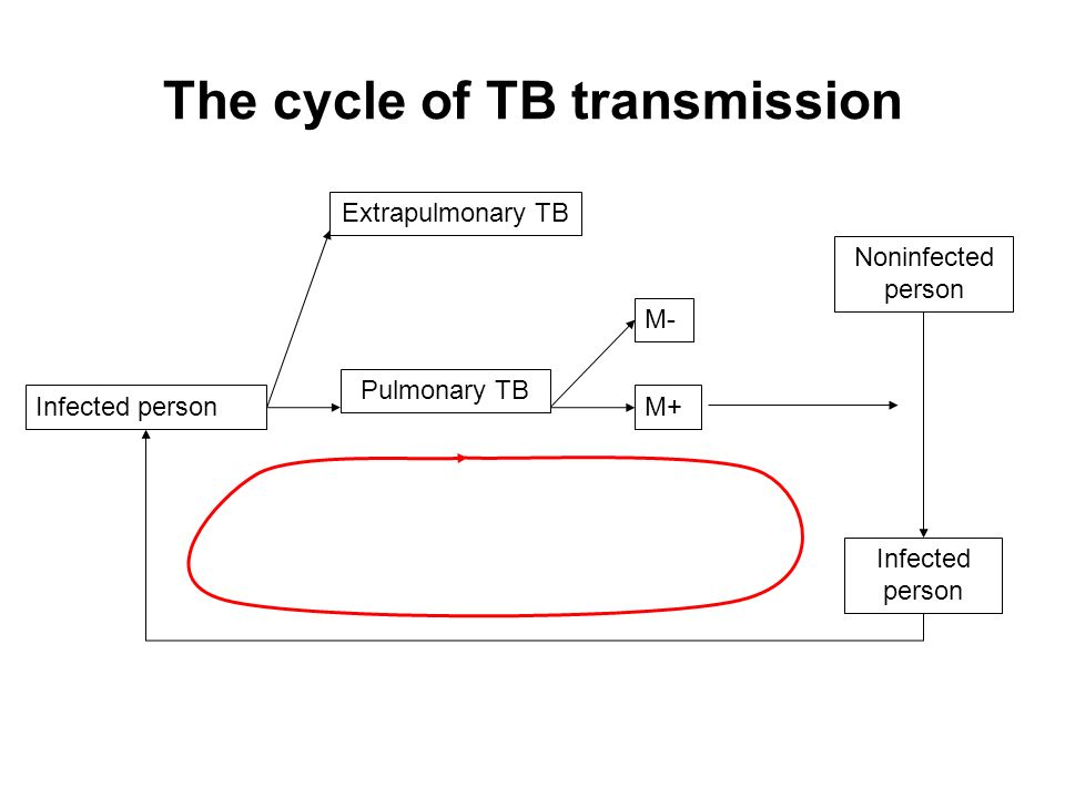 The cycle of TB transmission