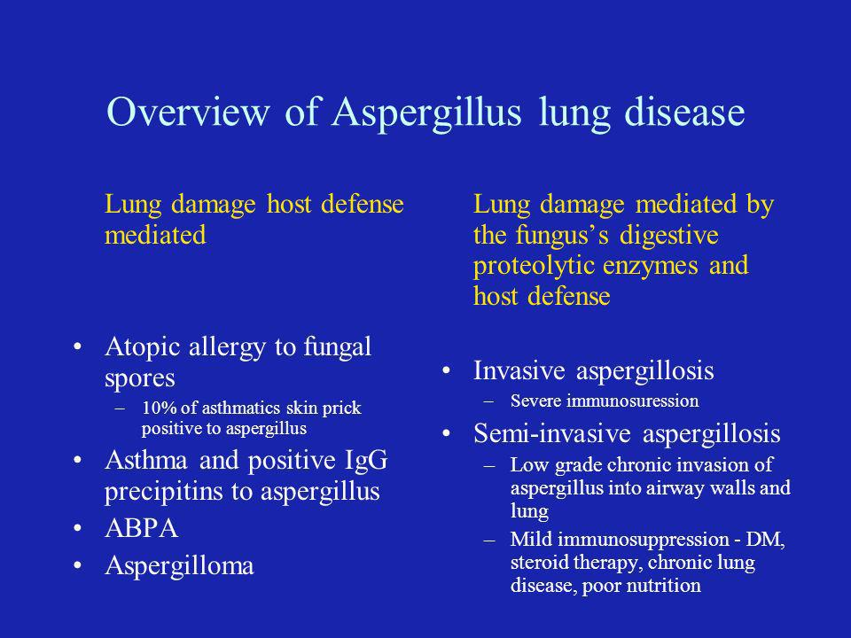Overview of Aspergillus lung disease