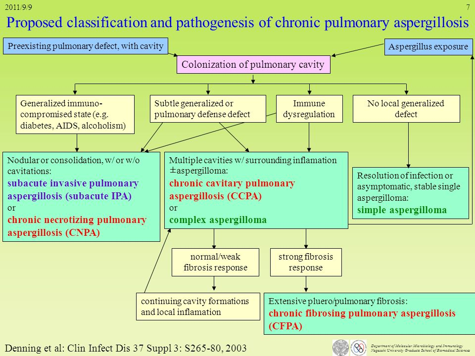 2011/9/9 Proposed classification and pathogenesis of chronic pulmonary aspergillosis. Preexisting pulmonary defect, with cavity.