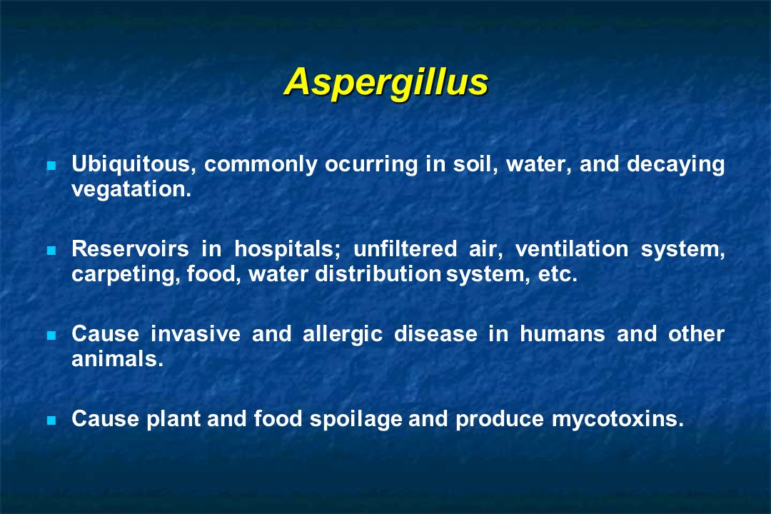 Aspergillus Ubiquitous, commonly ocurring in soil, water, and decaying vegatation.