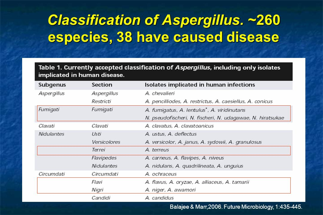 Classification of Aspergillus. ~260 especies, 38 have caused disease