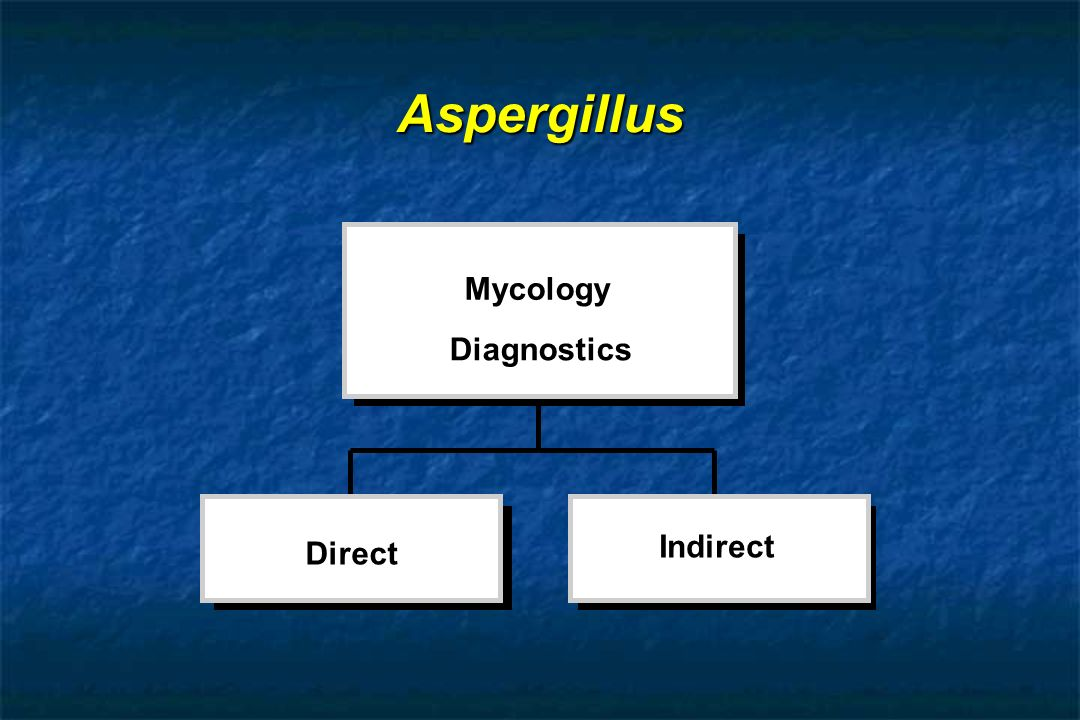 Aspergillus Mycology Diagnostics Indirect Direct
